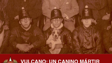 Photo of Vulcano: Un canino mártir Tercerino